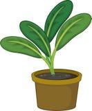 Planta ilustração stock