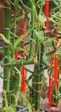 A planta imagem de stock