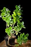 Planta Imagenes de archivo