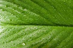 Planta 2 Imagem de Stock