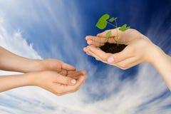 Planta Foto de Stock Royalty Free