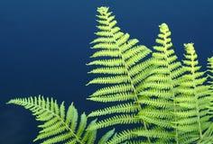 Planta Imagem de Stock