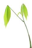Planta Royaltyfria Bilder