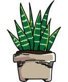 Planta Foto de archivo