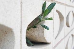 Planta Fotografía de archivo
