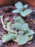 Planta Imagen de archivo