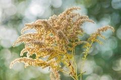 Planta Fotografía de archivo libre de regalías