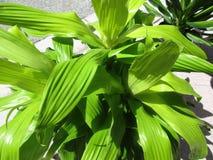 Planta Imagens de Stock Royalty Free