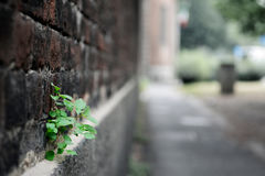 Planta Fotografia de Stock Royalty Free