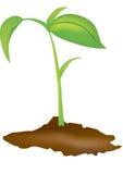 planta Arkivbild