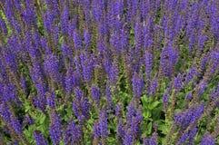 planta Abeja-cariñosa Imagenes de archivo