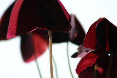 Planta abstrata Imagem de Stock Royalty Free