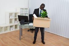 Planta africana de Holding Folder And del hombre de negocios en caja de cartón Fotos de archivo libres de regalías