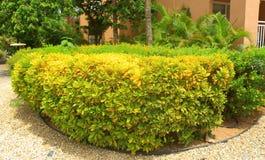 Planta agradable adornada con las pequeñas piedras alrededor Colores verdes y amarillos en la combinación agradable Naturaleza de Imagenes de archivo