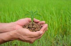 Planta a agricultura Plantas crescentes Planta a plântula As mãos que consolidam e que molham o bebê novo plantam o crescimento n imagem de stock