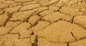 Planta agrietada del desierto imagenes de archivo