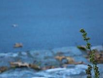 Planta al lado de un río Fotos de archivo