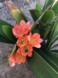 Planta alaranjada Imagem de Stock Royalty Free