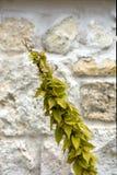 A planta amarela no bege natural apedreja o fundo Fotos de Stock