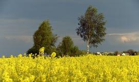 Planta amarilla de la violación y cielo oscuro Imágenes de archivo libres de regalías