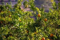 Planta anaranjada fotografía de archivo libre de regalías