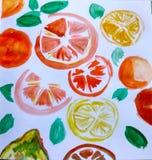 Planta anaranjada elegante, pintado a mano citrus ilustración del vector