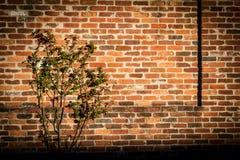 Planta ao lado da parede de tijolo suja Imagem de Stock