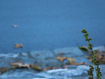 Planta ao lado de um rio Fotos de Stock