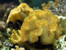 Planta aquática no aquário Foto de Stock Royalty Free