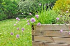 Planta aromática no plantador fotos de stock