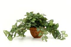 Planta artificial da casa fotos de stock royalty free