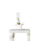 Planta artificial del primer con la flor blanca de la orquídea en la maceta rosada en la tabla de madera de la armadura aislada e Imagenes de archivo