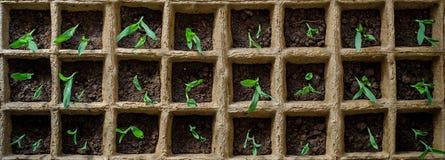 Planta av grönsaker Arkivfoto