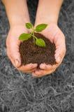 Planta B/N das mãos Foto de Stock Royalty Free