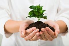Planta bonita fotografia de stock royalty free