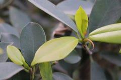 Planta bonita da cerca do jardim Imagens de Stock