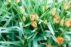 Planta bonita da flor do verão Imagens de Stock Royalty Free