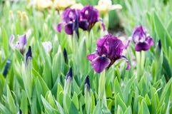 Planta bonita da flor do verão Imagens de Stock