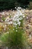 Planta bonita da flor do verão Foto de Stock