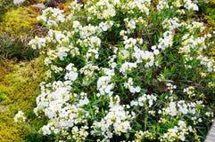 Planta bonita da flor do verão Fotografia de Stock Royalty Free