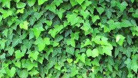 Planta bonita das folhas no conceito da flora da natureza da árvore vídeos de arquivo
