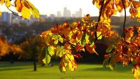 Planta bonita das folhas no conceito da flora da natureza da árvore video estoque