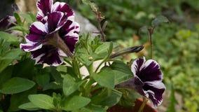 Planta bonita do gerânio em um jardim público o botão balança no vento 4K vídeos de arquivo