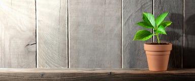 Planta bonita en un estante de madera imagenes de archivo
