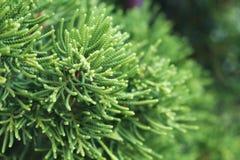 Planta borrosa verde del bosque Foto de archivo