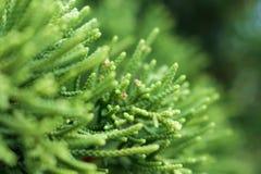 Planta borrosa verde del bosque Fotos de archivo