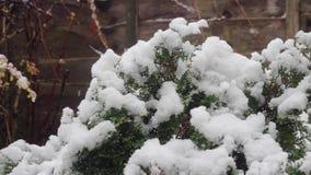 Planta cargada con nieve caida fresca metrajes
