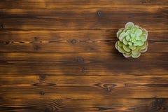 Planta carnuda no fundo de madeira Vista superior imagem de stock