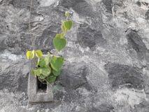 Planta carregada na parede de pedra imagens de stock royalty free