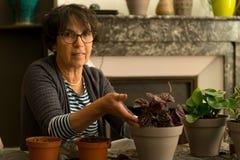 Planta casera de la casa que vuelve a poner que cultiva un huerto Imagen de archivo libre de regalías